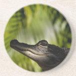 Shady Alligator coaster
