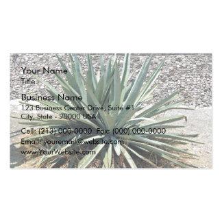 Shady aloe vera on a sunny day business card