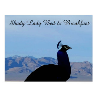 Shady Lady Bed & Breakfast Postcard