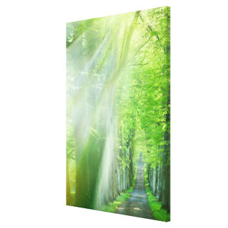 Shafts of Sunlight Gallery Wrapped Canvas