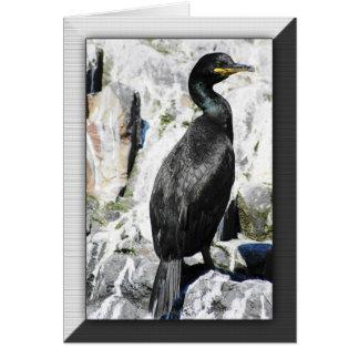 Shag bird birthday card, wildelife birds greeting card