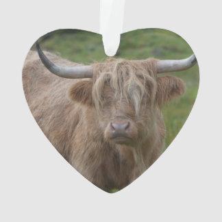 Shaggy Blonde Highland Cow