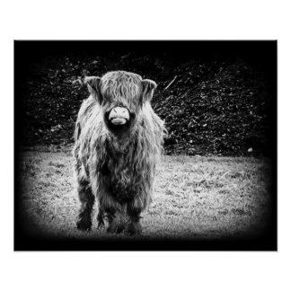 Shaggy Highland Cow Photo (Black & White) Poster