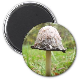 Shaggy Ink Cap Mushroom Magnet
