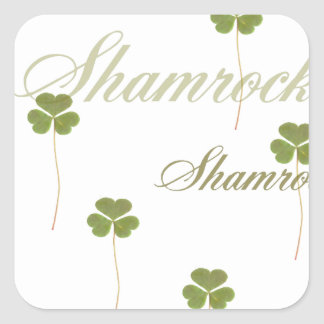 Shamrock for Saint Patrick's Day Square Stickers
