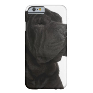 Shar Pei (1 year old) close-up Barely There iPhone 6 Case