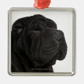 Shar Pei (1 year old) close-up Christmas Ornament