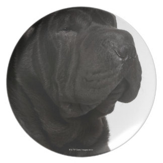 Shar Pei (1 year old) close-up Plate