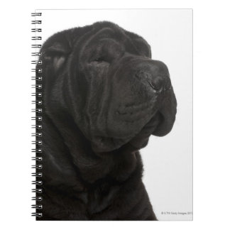 Shar Pei (1 year old) close-up Spiral Notebook