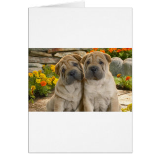 Shar Pei Puppies Card