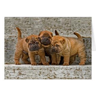 Shar-Pei Pups 3 in a row Greeting Card