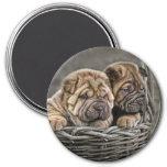 Shar-Pei Pups in Basket Magnet
