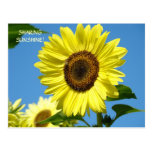 SHARING SUNSHINE Sunflower Post Cards Sun Flowers