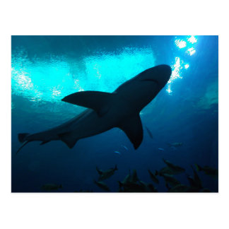 Shark at the Georgia Aquarium Postcard