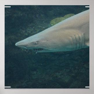 Shark Bite Posters