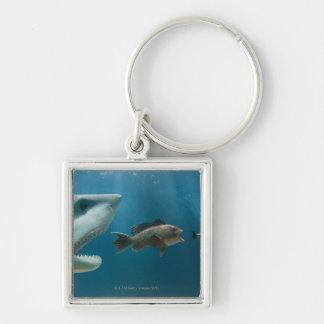 Shark chasing sea bass chasing juvenile key ring