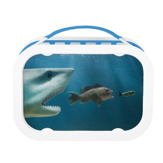 Shark chasing sea bass chasing juvenile lunch box