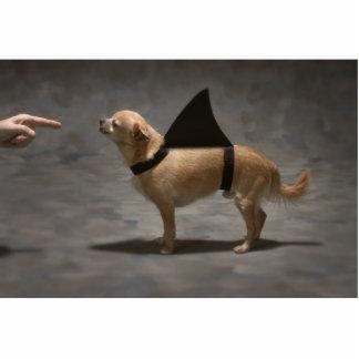 Shark Dog Photo Sculpture