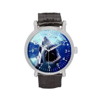 shark watches