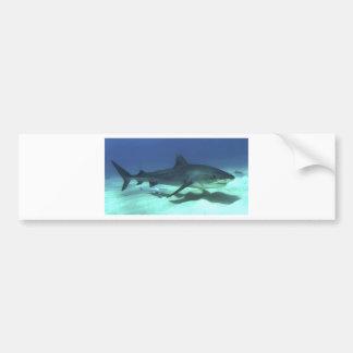 Shark Fish Ocean Tropical Ocean Destiny Gifts Bumper Sticker
