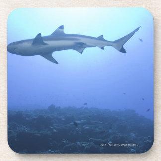 Shark in ocean, low angle view beverage coasters