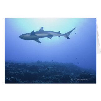 Shark in ocean, low angle view card