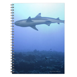Shark in ocean, low angle view notebook