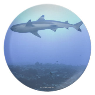 Shark in ocean, low angle view plate
