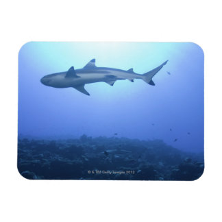 Shark in ocean, low angle view flexible magnet