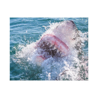 Shark in the water canvas print