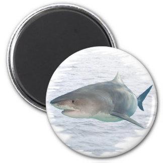 Shark in water 6 cm round magnet