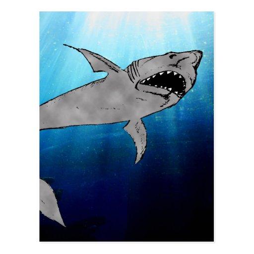 Shark Post Cards