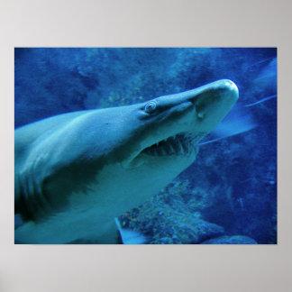 Shark Poster