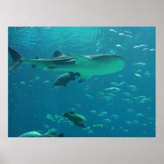 Shark Reef Poster