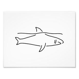 shark shark fish fin sea photographic print