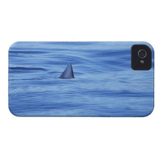 Shark swimming in ocean water iPhone 4 cover
