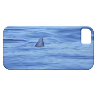 Shark swimming in ocean water iPhone 5 covers