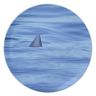 Shark swimming in ocean water plate