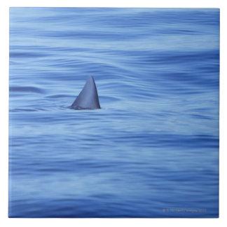 Shark swimming in ocean water tile