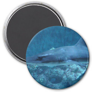Shark swimming in the ocean Photo Magnet