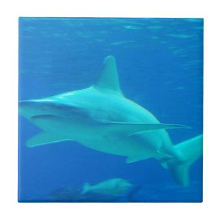 Shark Swimming Tile