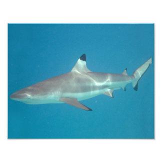 Shark swimming underwater photo print