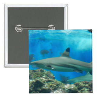 Shark with Reef Button