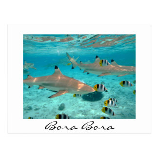 Sharks in the Bora Bora lagoon white text postcard