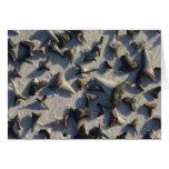 Sharks Teeth Note Card
