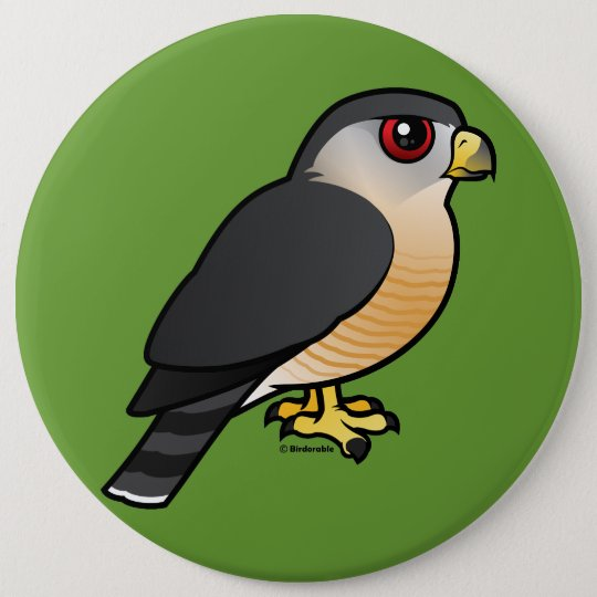 Sharp-shinned Hawk 6 Cm Round Badge
