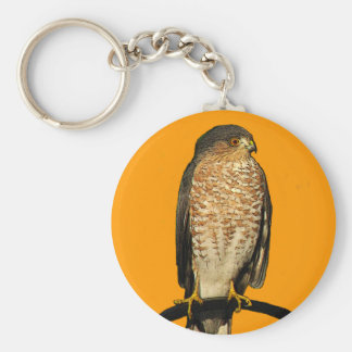 Sharp-Shinned Hawk Key Ring