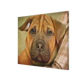 Sharpei-Beagle Puppy Gallery Wrap Canvas