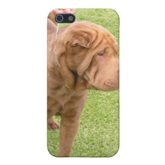 Sharpei show dog case for iPhone 5/5S