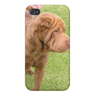 Sharpei show dog iPhone 4 case